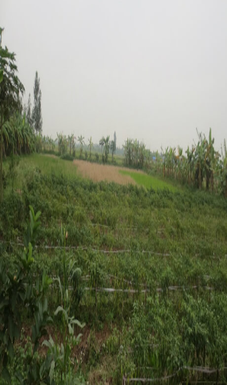 Tham Dinh24 - Tháng 7 năm nay sẽ khởi công dự án công viên Sài Gòn Safari